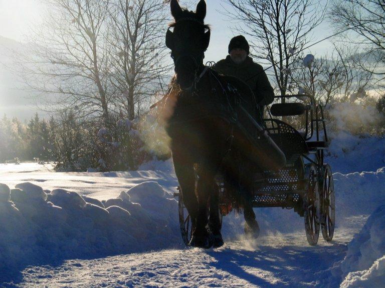 Grossansicht in neuem Fenster: Kutschfahrt Winter Filze